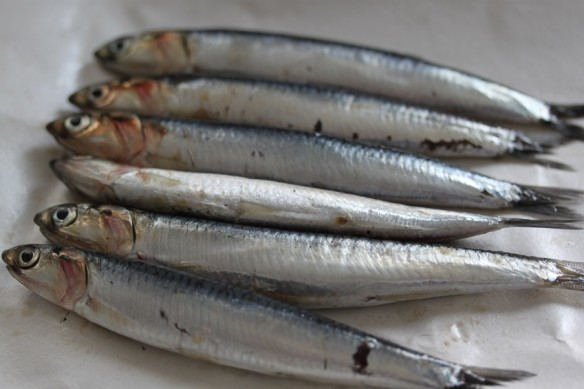 anchoas frescas