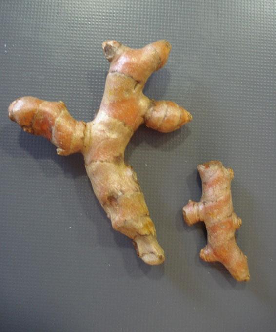curcuma1