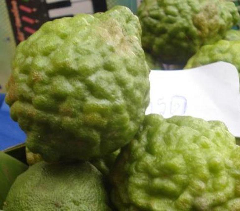 Arom ticos de tailandia y sus plantas umami madrid for Plante kefir